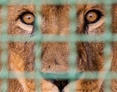animal prison