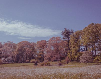 Vintage Forests - Photography Set