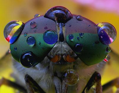 Macro Photography Bug Eye