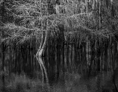 First Photos Of Lake Martin Cypress Preserve 12-16-2016