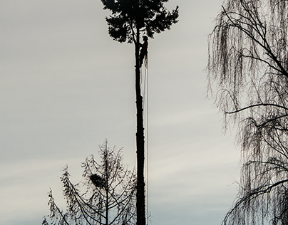 Arborists Project - Editorial Photography