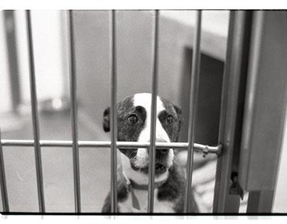 Battersea dogs