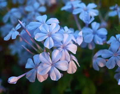 Flowers, nature, beauty