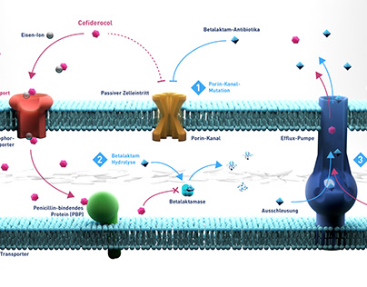 Bypassing the development of resistance to antibiotics