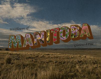 Manitoba Vintage Postcard