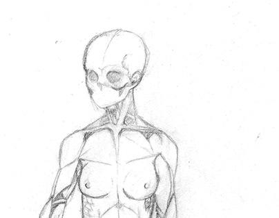 Anatomic drawings /Anatomy poses / character desing