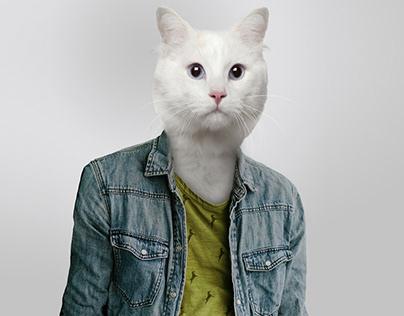 Barry (cat version)