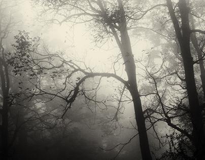 The last sanctuary of solitude