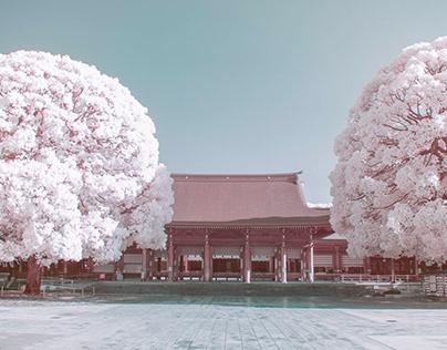infrared photography -Meiji Jingu, Shibuya-