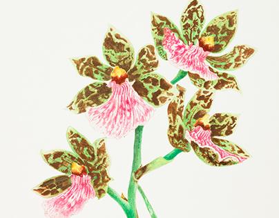 Orchids - Watercolour illustrations