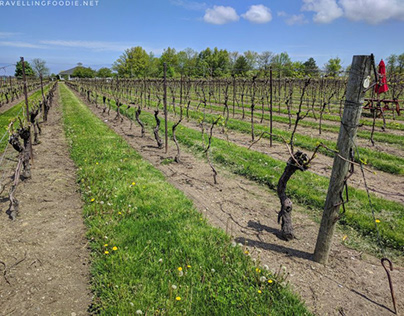 We are your specialists in Niagara Wine Country