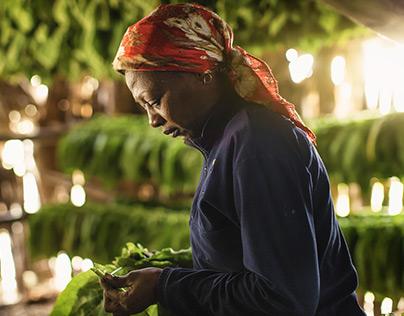 Tobacco Farmer of Vinales, Cuba