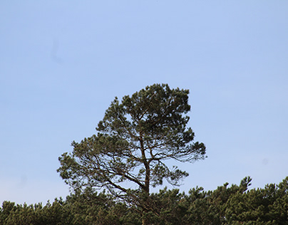 A tree grows on top of a tree
