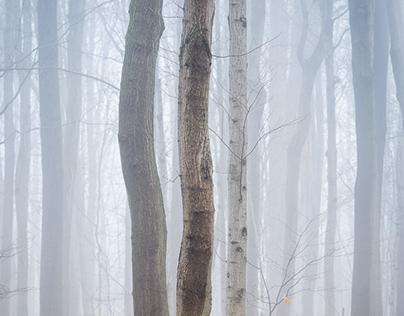 Bronte Fog