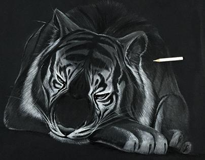 Estudos de ilustração com lápis branco