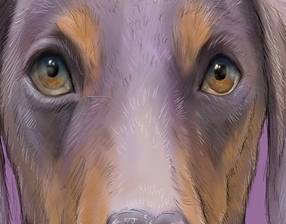 Dog Illustrations