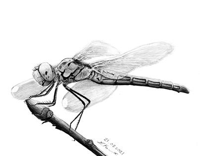 Dragonfly / Yusufçuk Digital Drawing