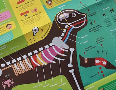 Crianza, amor y respeto: Infografías de mascotas