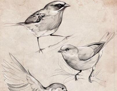 Birds. Procreate sketching