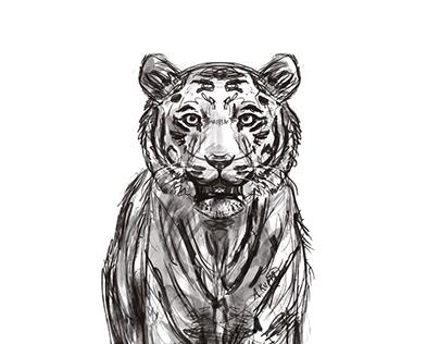 Animal Sketch Studies