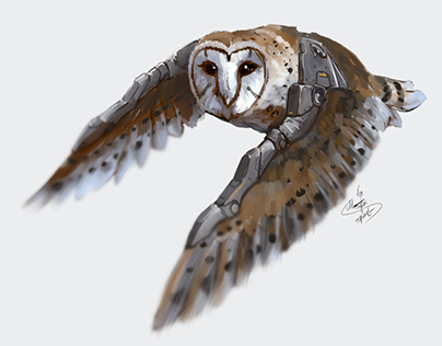 Week of augmented owls