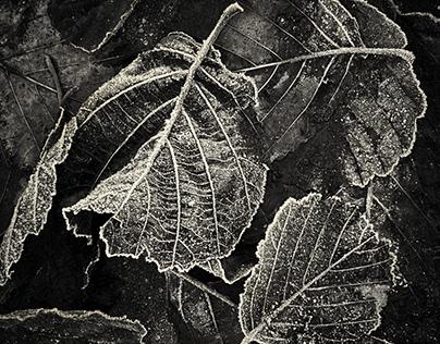 Dark Winter in Blackandwhite