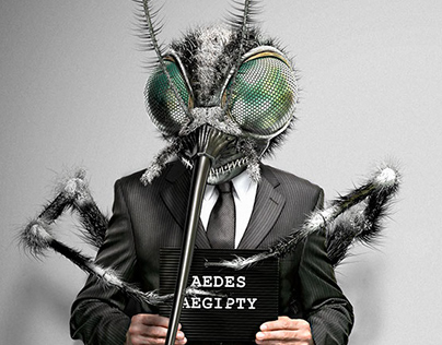 CG / Aedes Aegypti / 2008