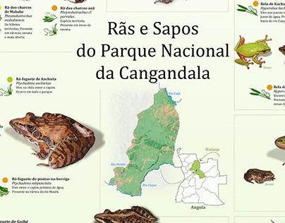 Rãs e Sapos do parque Nacional da Cangandala