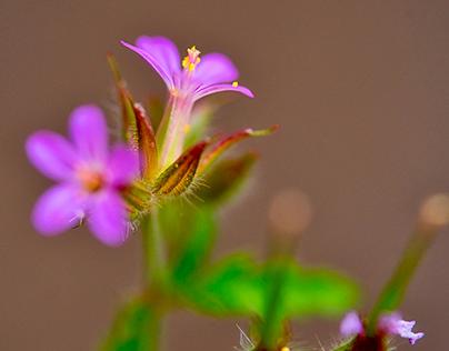 Fresh Macro Flowers