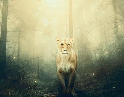 Lioness, photomanipulation