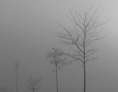 Grey Stories
