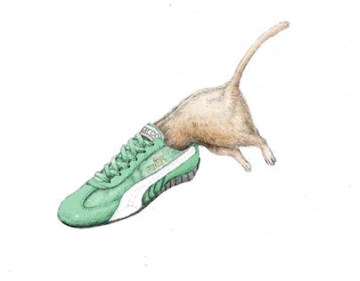 Cat wearing Sneakers