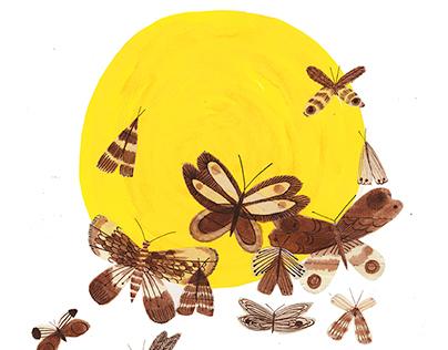 Moths/Sunbathers