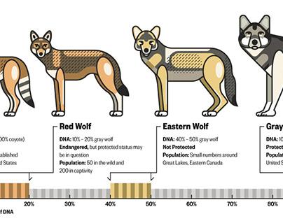 Wolf Hybrid DNA