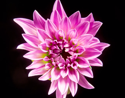 Are Plants Intelligent? - Kenny Ausubel, Jeremy Narby