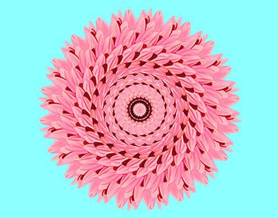 turnitout Art direction Graphic Design