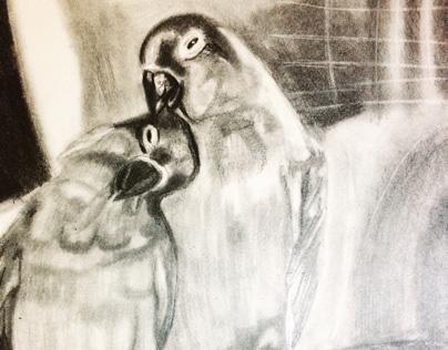 Bird sketch done