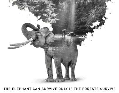Elephants of Sumatra