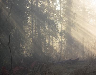 Fog Day 2 / Godray Edition
