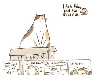 Daily Cat 猫咪日常