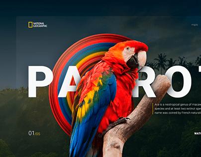 PARROT. Main screen design concept