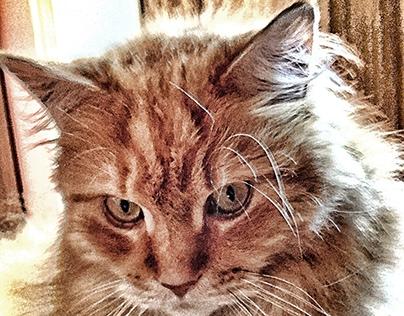 trombonisme#cats