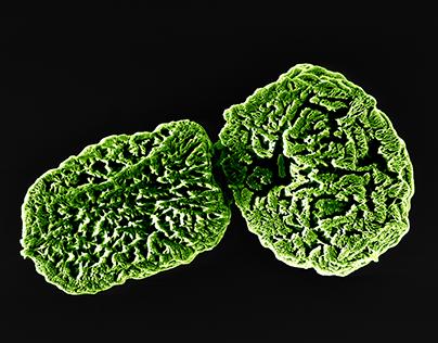 Spores / NanObjectives