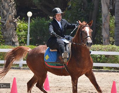 Equestrian Championship