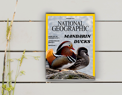 National Geographic Graphic Design