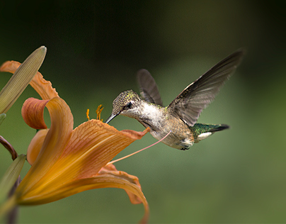 Photographic Nature