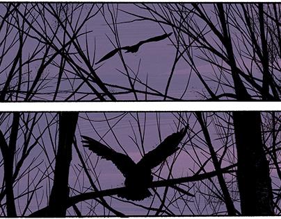 """Hush of Night"" Short Story"