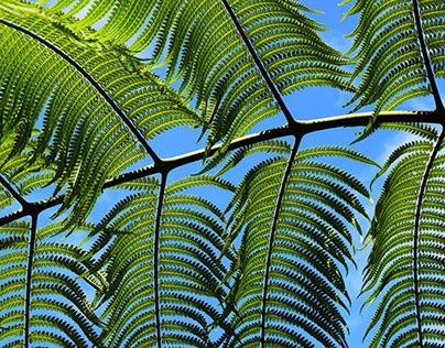 Green Kauai