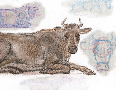 Simple drawing of a cow.