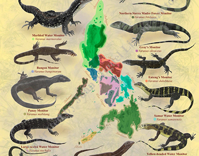 Philippine Monitor Lizards